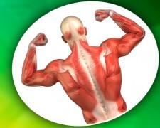 Упражнения для укрепления мышечного корсета