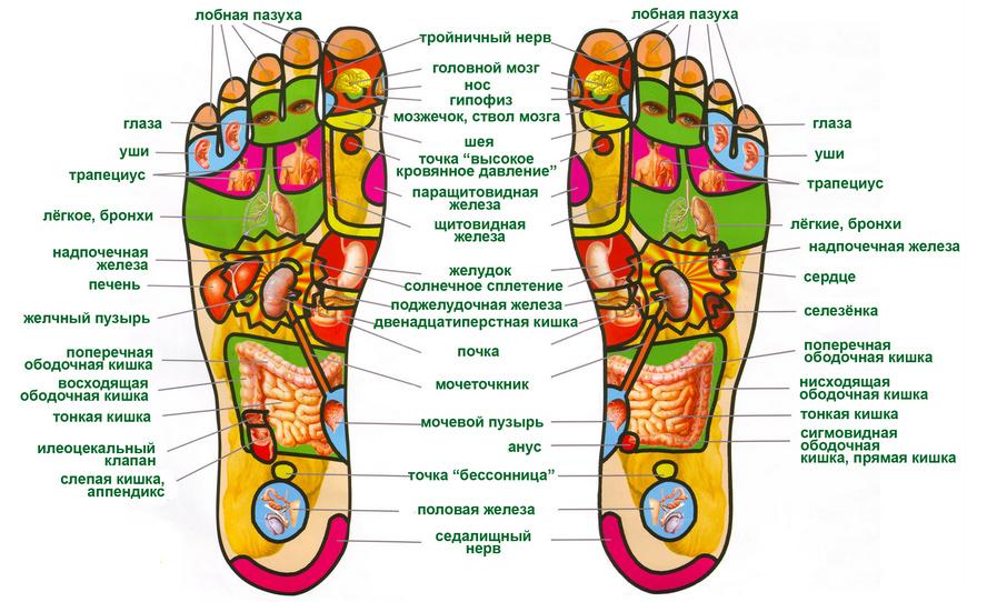 Точки, расположенные на пальцах ног, связаны с зубами, глазами, носом, сердцем, ушами