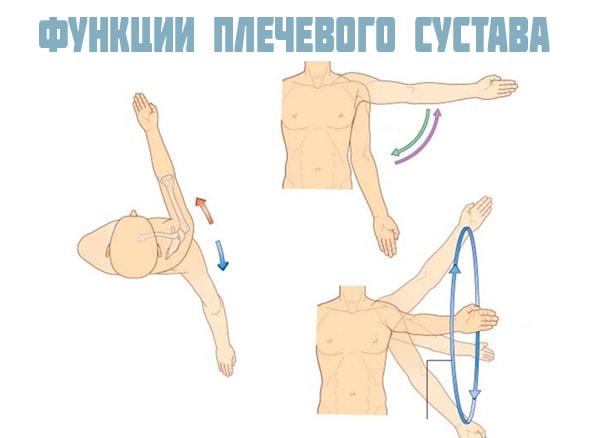 Функции плечевого сустава
