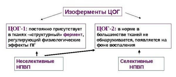 ЦОГ-1 и ЦОГ-2