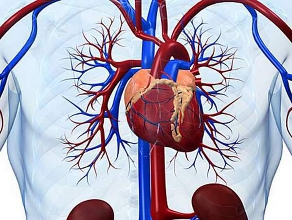 Часто боль в груди слева связана с патологиями сердца