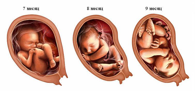 3 триместр беременности женщины