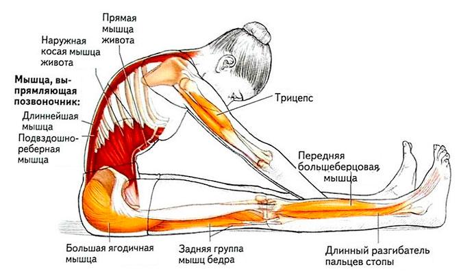 Упражнения для спины при позвоночника thumbnail