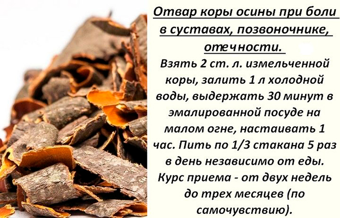 Отвар коры осины